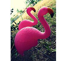 04-26-11:  I Have Flamingos!!!! Photographic Print