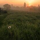 Dandelion Sunrise by Martin Griffett