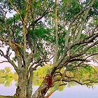 Tree by the Zambezi River, Zambia by Alberto  DeJesus