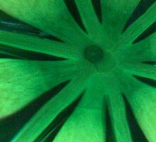 A green pattern - can you identify? SOLVED! by bubblehex08