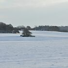 Snowy Scene by Toots2