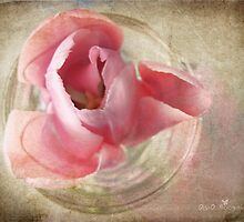 Pink shadows by Olga