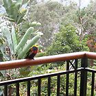 Lorikeets after the rain by clareville