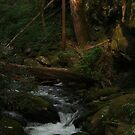 dusk falls by lawsc