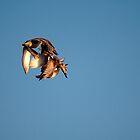 acrobatic in air by THHoang