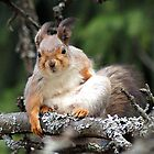 Fresh squirrel mom - a windy day by Susanna Hietanen