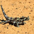 Thorny Devil by Miriam Shilling