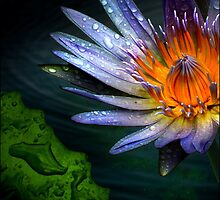 waterlily by carol brandt