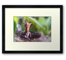 first aria of spring Framed Print
