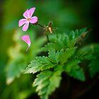 Tears of a flower by Alina Uritskaya
