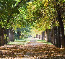 park landscape in autumn  by Medeu