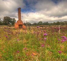 Wildflowers - Hill End, NSW Australia - The HDR Experience by Philip Johnson