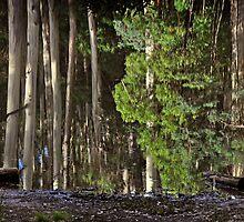 Sanitorium Lake by Peter Hammer