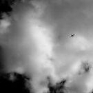 Fly Away by Ulf Buschmann