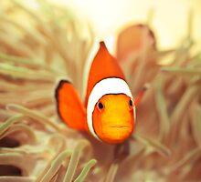 Clownfish by MotHaiBaPhoto Dmitry & Olga