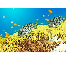 Sweetlips Photographic Print