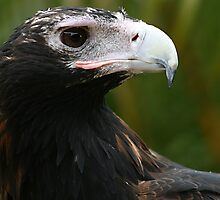 Eagle Eye by Barbara  Glover