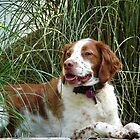 "Copper in the Grass by Christine ""Xine"" Segalas"