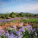 Malvern Hills : Midsummer Bluebells by Angie Latham