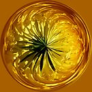 Dandy flower in the sphere by capney