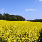 Canola Fields by SeeOneSoul