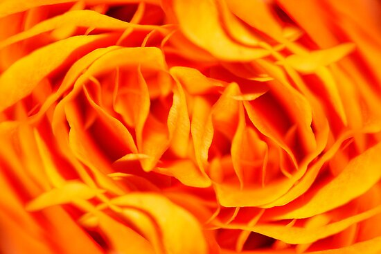 Floral Fire by Ronny Falkenstein