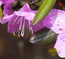 A Taste For A Little Sweet Nectar  by daphsam