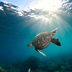Honu Sunset by Flux Photography
