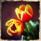 Two Tulips by Colleen Drew