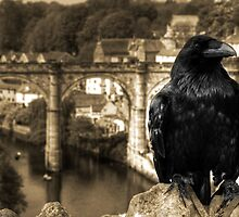 The Raven of Knaresborough Castle by Rob Hawkins