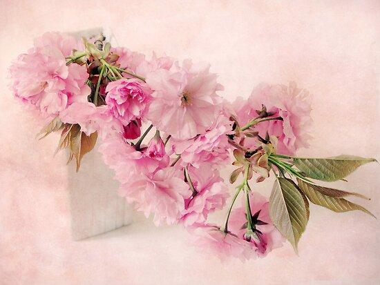 Blush by Jessica Jenney
