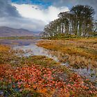 Autumn leaves, Loch Awe by Gary Eason