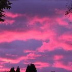 Pink autumn sky by hummingbirds