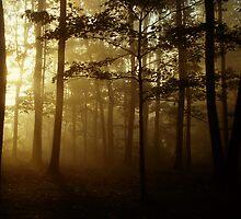 Golden Wood by Greg Walker