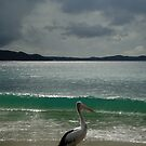 &quot;If Only I Could Surf said the Pelican....If Only I Could Fly said I&quot; by Samantha  Goode