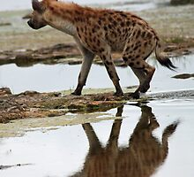 Stalking hyena by jozi1