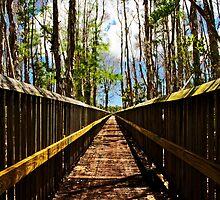 Floridian Boardwalk by Michael Damanski