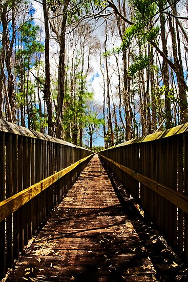 Floridian Boardwalk by Michael Damanski
