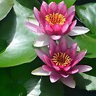 Water Lilly - Flowing water features at star of the Sea resort Terrigal. by arthaswisdom