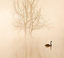 Misty Morning by Cathy Middleton
