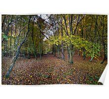 Autumn woodland avenue, Penn Poster