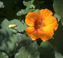 La Belle Fleur by heatherfriedman