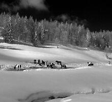 horses in winter by neil harrison
