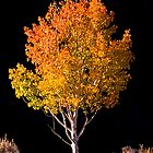 Autumn Aspen by Mike Hendren