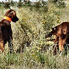 Bird in the Bush - Irish Setters Hunting by Barb Miller