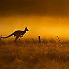 Sun Rise Aussie style by Kathryn Potempski