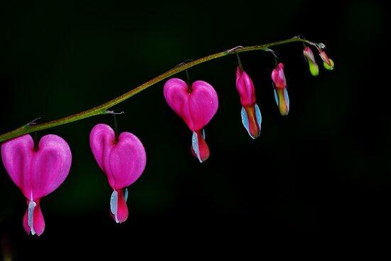 Bleeding Love by vertigoimages