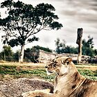 Dreaming for Mother Africa (2) by diLuisa Photography