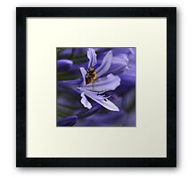 In a sea of blue Framed Print