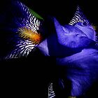Blue Iris by Ascender Photography